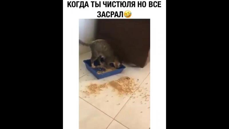 Animal_planet_vid_1_23082018_0846.mp4