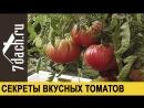 🍅 7 секретов выращивания вкусных томатов 7 дач