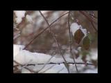 Олег Хромов На белом покрывале января