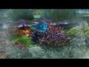 Акулья приманка (Подводная братва 2) 2006