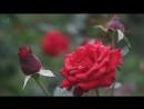 Джамиля Айбазова и Инал Джуккаев-Не рви цветы