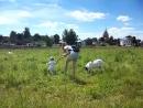 Суздаль На лугу пасутся козы