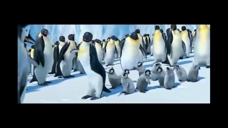 Пингвины зажигают мари муро почеш!