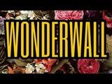 Oasis - Wonderwall ( audio cover )