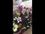 Комнатные цветы к 8 М А Р Т А