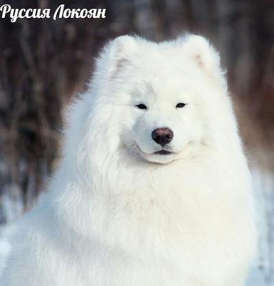 Светлана Самоед