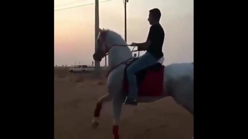 Arabskiy loshad