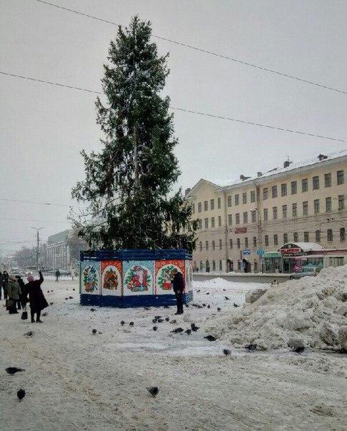 Позор на пл.Ленина #Иваново Поставили мертвую ёлку