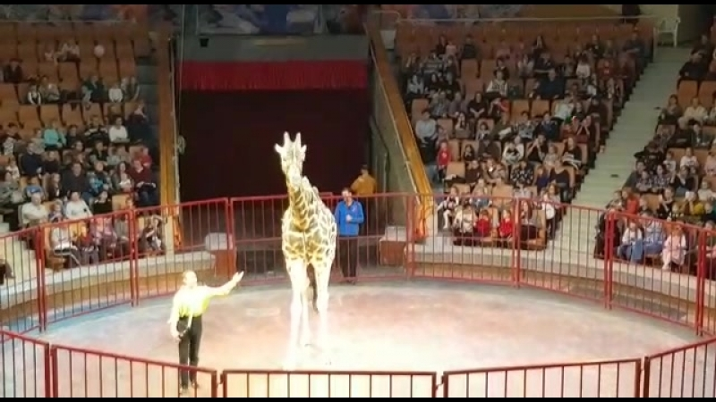 Жираф высотой 7 метров