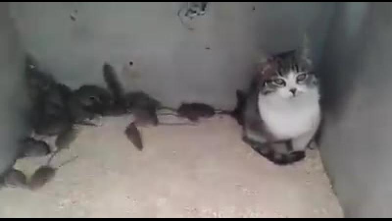 Бракований кіт
