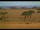Муж с женой на экскурсии по Африке видят как гепард гонится за антилопой Жена начинает переживать за маленькую антилопу Муж об