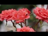 Ernesto Cortazar - Autumn Rosse