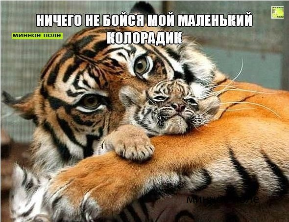 https://pp.userapi.com/c831309/v831309073/8f5d8/MOTg7f0Mgwg.jpg