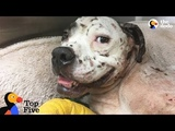 Dog Found Near Death is So Happy Now + Dog Rescues That Will Make You Cry The Dodo Top 5