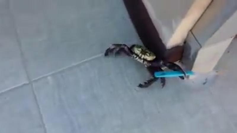 On est foutus. Même les crabes se sont converti à lislam