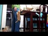 Приколы с кошками и котами #4_cut