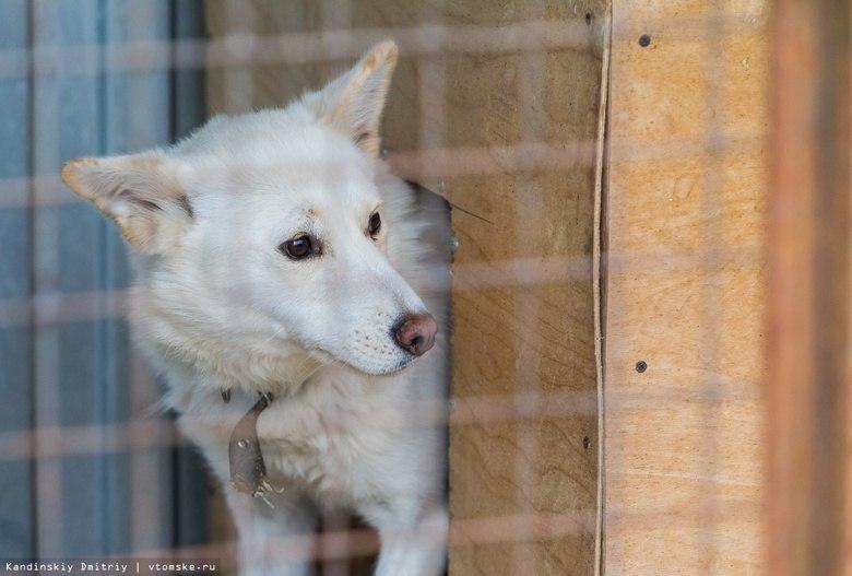 Проект томского приюта для животных с крематорием будет готов в начале 2018г.