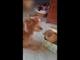 Собаке подарили друга