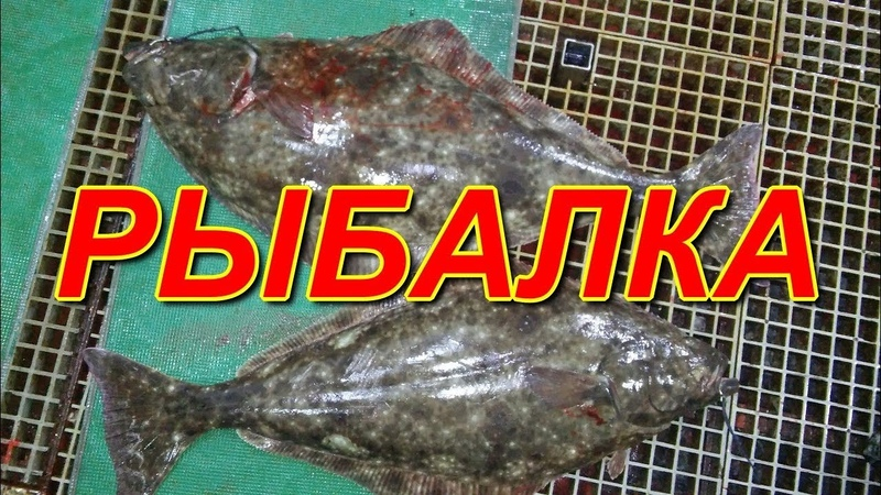 РЫБАЛКА НА ЧУКОТКЕ )) Fishing in Chukotka