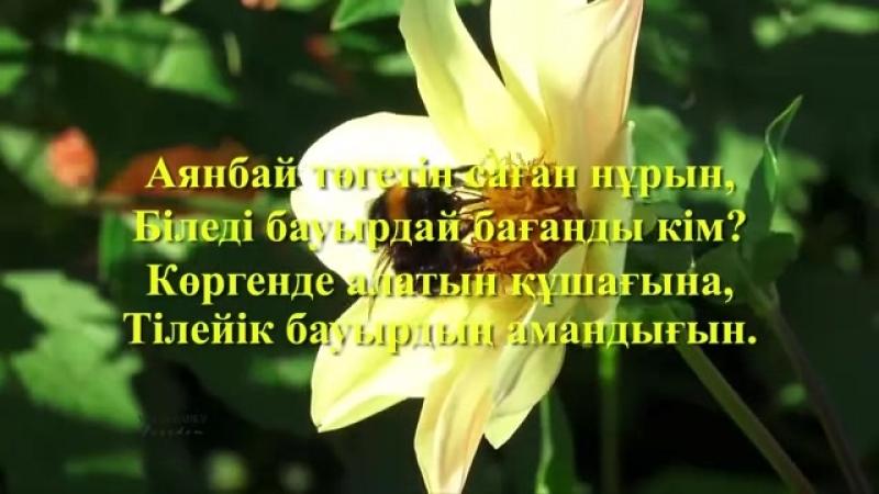 Иса ОМАР Бауырым Орындайтын Бибігүл Әшірбаева