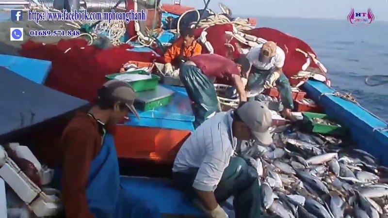 Nhật ký đi biển 4 -đánh bắt cá được đàn cá ngừ khổng lồ