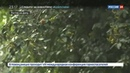 Новости на Россия 24 Ростовскую область ожидает 9 часовой ливень