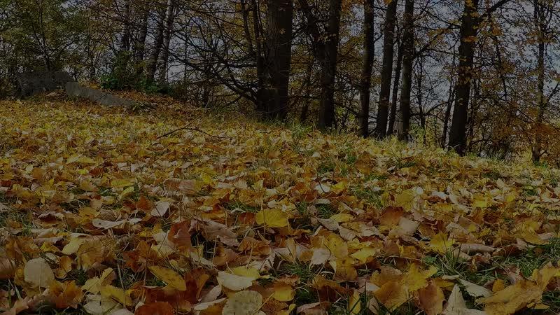 Autumn trip 18