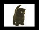 Кот по кличке Джеки. Мистическая история из жизни. 12