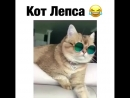 кот Лепса 😂