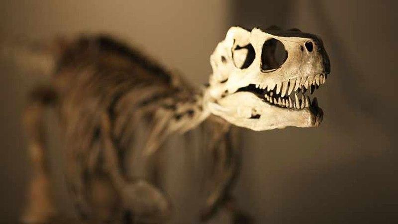 Новые факты про динозавров, минувшего 2017 года ч.2
