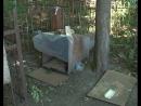 На курском кладбище из памятника сделали собачью будку