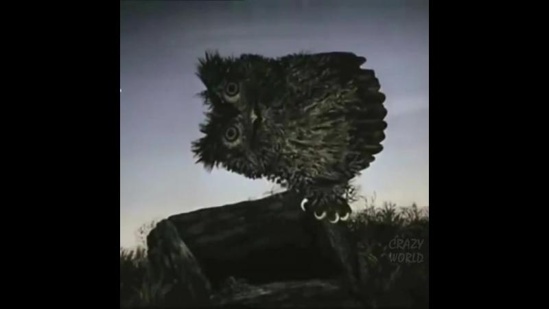 Озвучка мультфильма Ежик в тумане, фрагмент про сову 😂 смешное видео не порно » Freewka.com - Смотреть онлайн в хорощем качестве