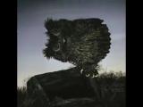 Озвучка мультфильма Ежик в тумане, фрагмент про сову ? смешное видео не порно
