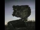 Озвучка мультфильма Ежик в тумане, фрагмент про сову 😂 смешное видео не порно