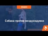 Собака против пылесоса