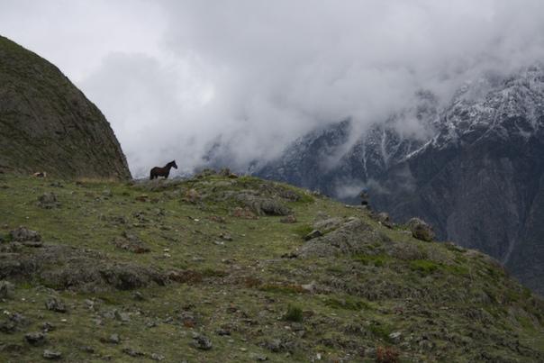 Вот почему я настиг Настю. Она захотела обойти стадо лошадей и коров, но не смогла, этот конь встал и угрожающе начал смотреть на неё.