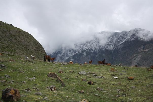 Нам всё же пришлось приблизиться к стаду и они все навострились и встали. Мы тогда взяли повыше в гору. Лучше неудобно идти, чем иметь проблемы с животными.