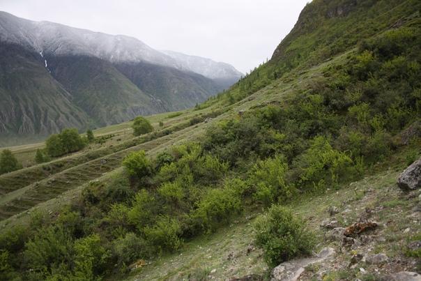 Пройдём стены кустов, через которые любят бродить лошади, так что кругом гривы висят.
