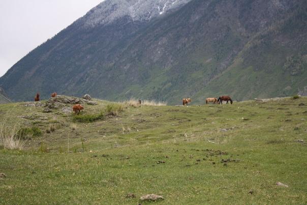 А тут ещё коняжки с коровами — никто не пытается приближаться к ним.