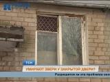 В Перми кошки и собаки неделю сидят в запертой квартире после смерти хозяйки