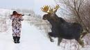 Охота на Лося 2018!! Лучший Воспоминания! Moose Hunting Best Video Collection 2018!!