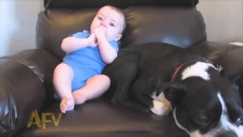 Ребенок пукнул собака чуть не сдохла