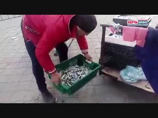 На засол пойдет: в Керчи продают грязную хамсу