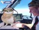 Авиакомпания Easy Jet отстранила пилотов за это