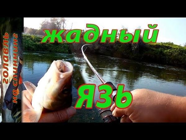 Неудачно получилось... Ловля ГОЛАВЛЯ и ЯЗЯ на малой реке в сентябре.