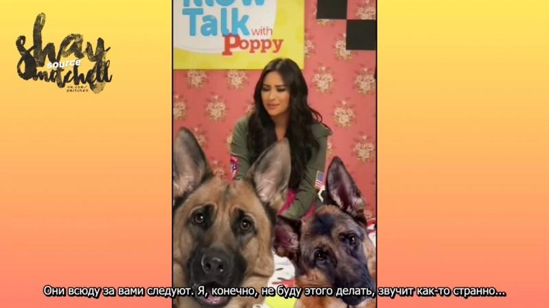 Шей Митчелл в Снапчат-шоу «Беседа под одеялом с Поппи» [RUS SUB] » Freewka.com - Смотреть онлайн в хорощем качестве
