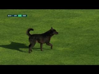 В матче #СлуцкГомель на поле неожиданно появился хвостатый игрок.