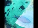 аквариум на Мальдивских островах