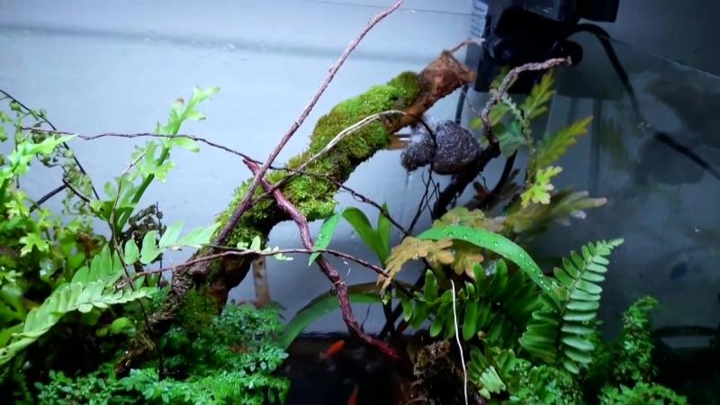 Layout rain forest natural mini for paludarium