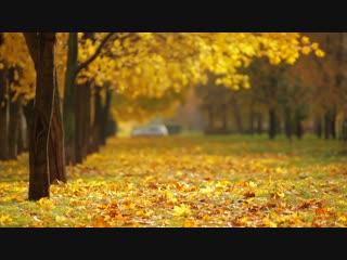 Осенний листопад / Autumn leaf fall